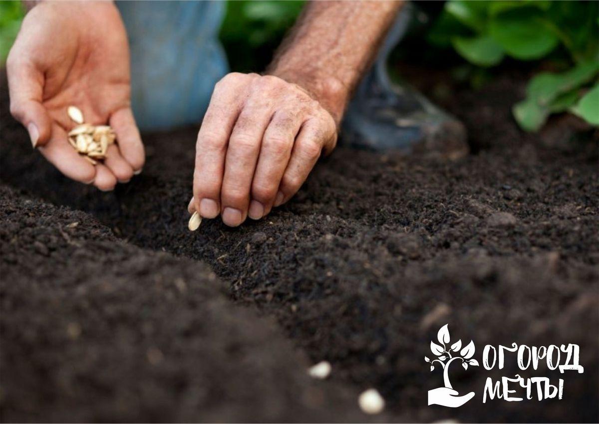 Секрет самого раннего урожая на даче очень простой - подзимний посев! Двенадцать растений, которые можно сеять под зиму на огороде