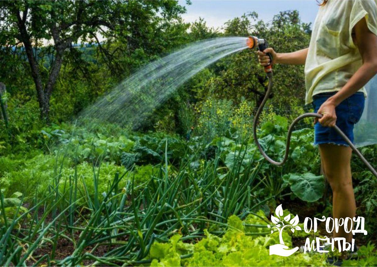 Семь огородных растений, которые можно посеять на грядках вместо чеснока