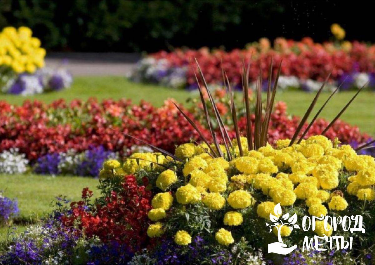 Какие садовые цветы можно посадить на клумбе в августе? Представляем девять лучших цветущих многолетников!