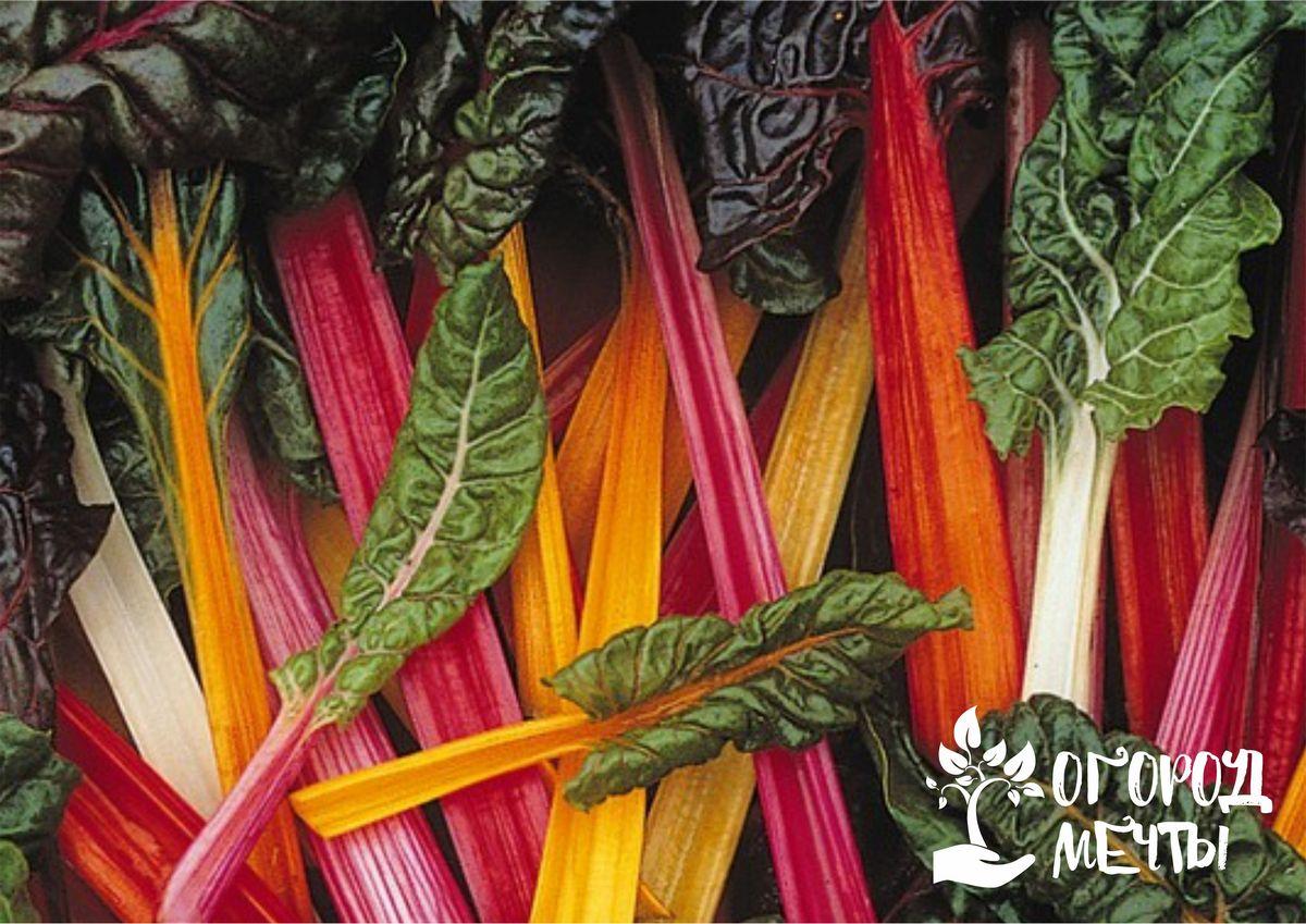 Самая полезная зелень на дачном огороде: как выращивать популярный суперфуд - мангольд!