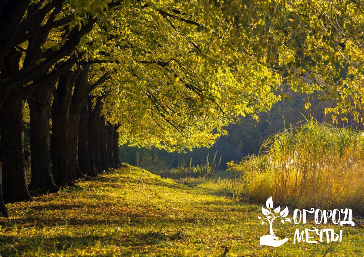 Красивый осенний сад: десять мероприятий сентября из календаря садовода