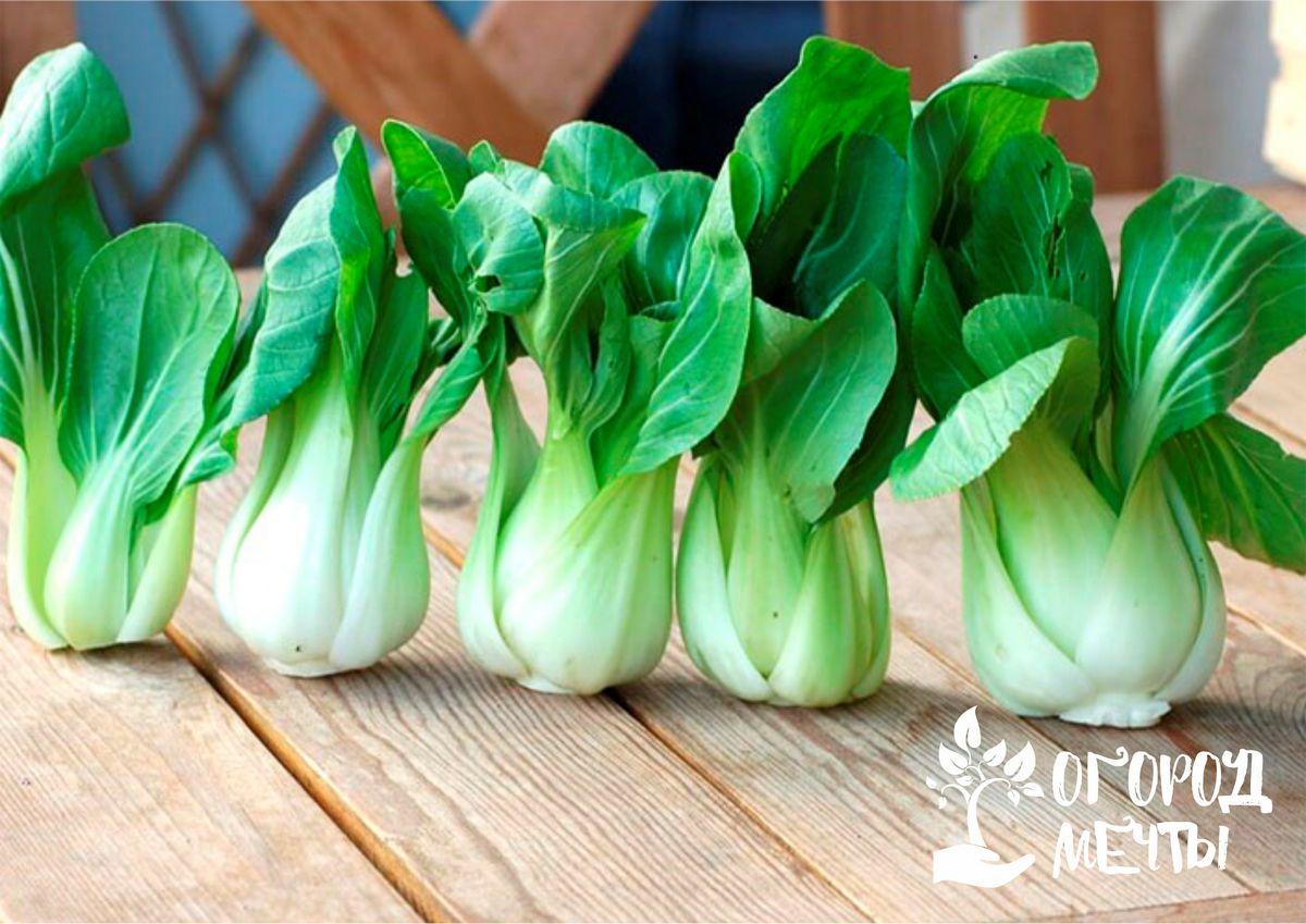 Хотите вырастить экзотический овощ на дачном огороде? Начните с китайской капусты - пак-чой!