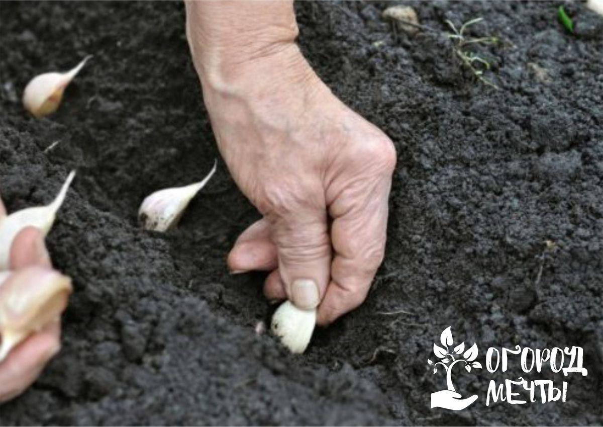 Как подготовить грядки к подзимнему посеву