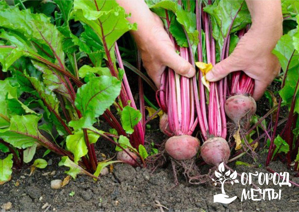 Ваш огород скрыт в тени большую часть дня? Посадите на нем эти растения для щедрого урожая!