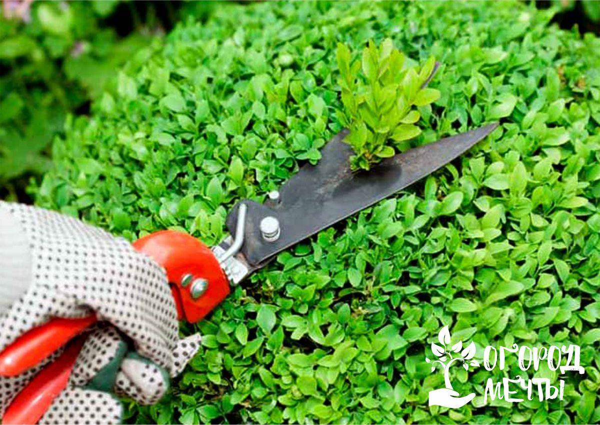 При выборе ножниц обязательно учитывайте эргономичность инструмента и удобство ручки