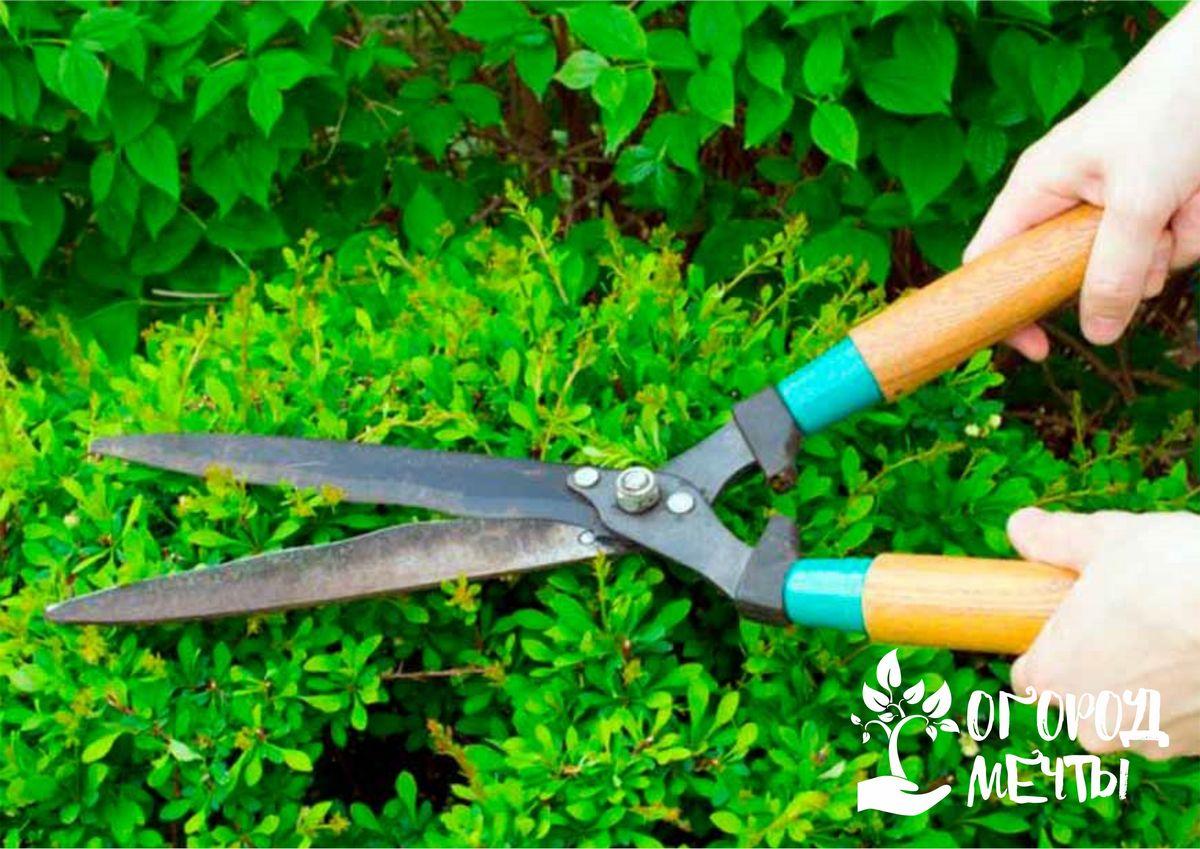 Разновидности ножниц для подрезки изгороди