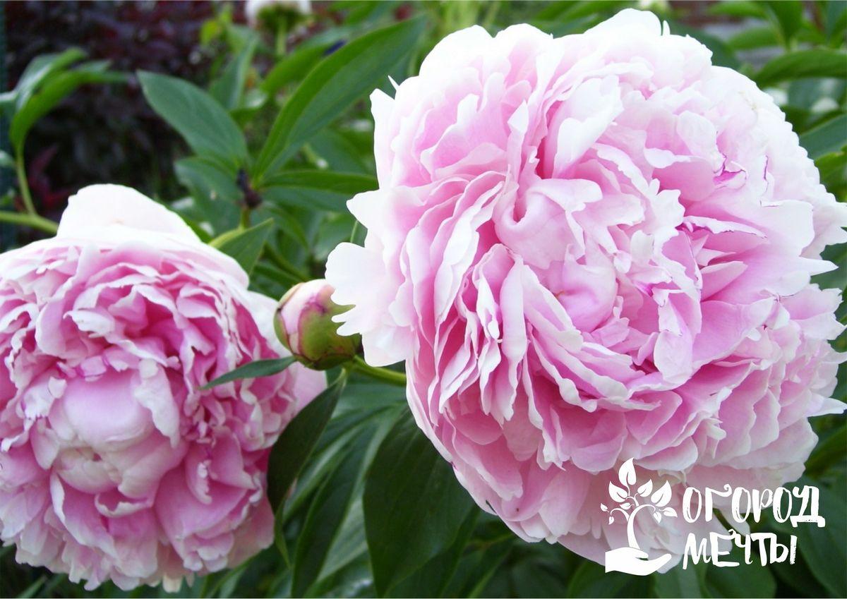 Какие многолетники можно посадить и посеять осенью: топ-9 лучших садовых цветов