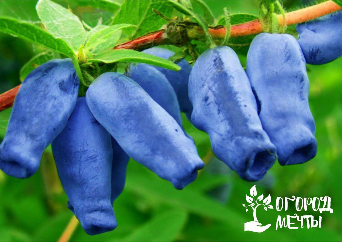 Хотите обновить свой сад? Узнайте, какие плодовые кустарники подходят для посадки осенью!