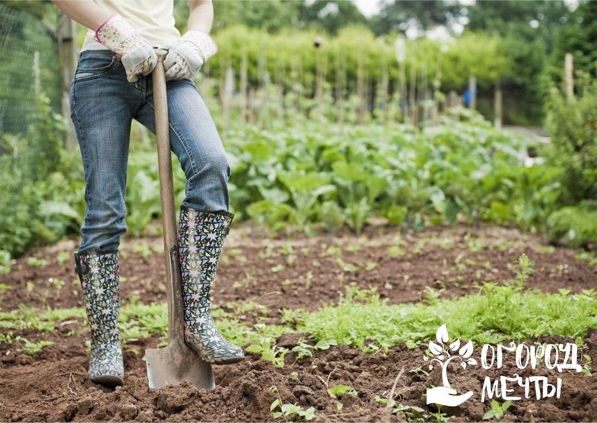Как выбрать качественную лопату
