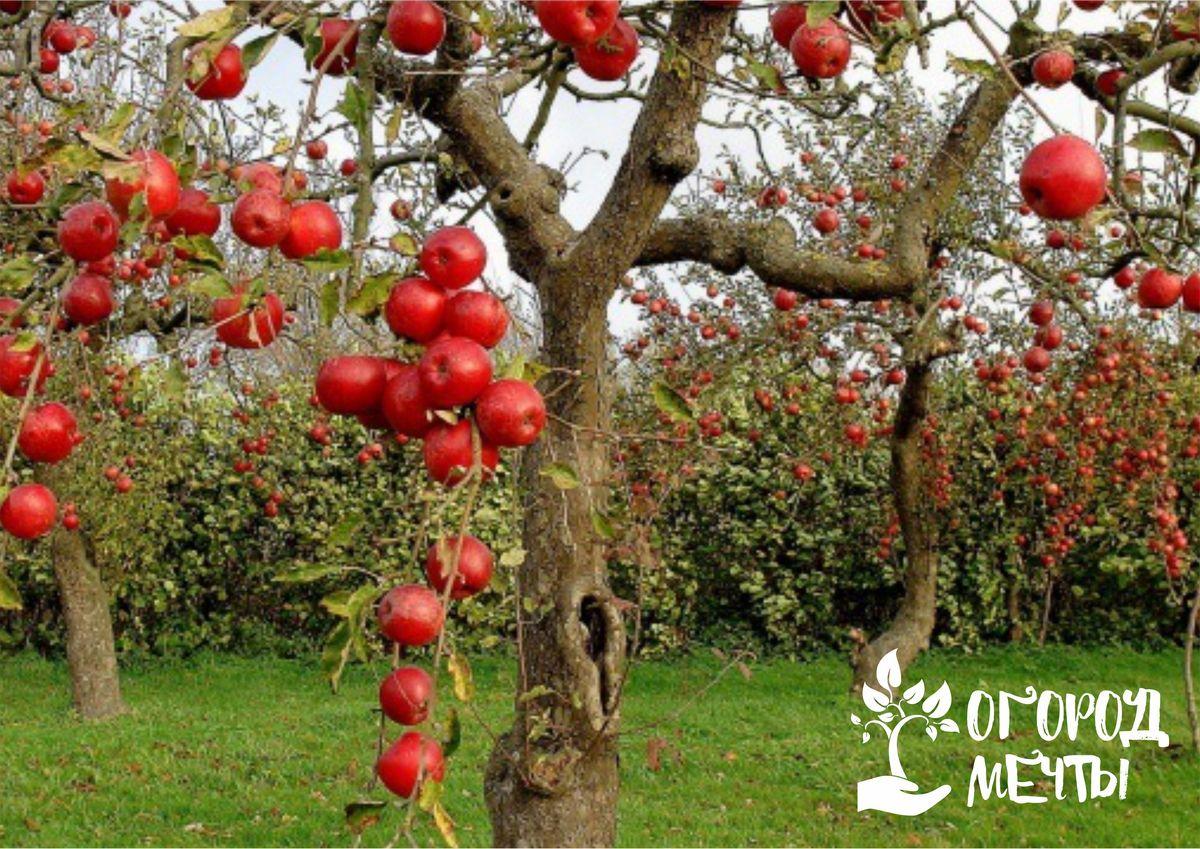 Чтобы фруктовые деревья и кустарники порадовали урожаем летом, нужно подкормить их этими удобрениями осенью!