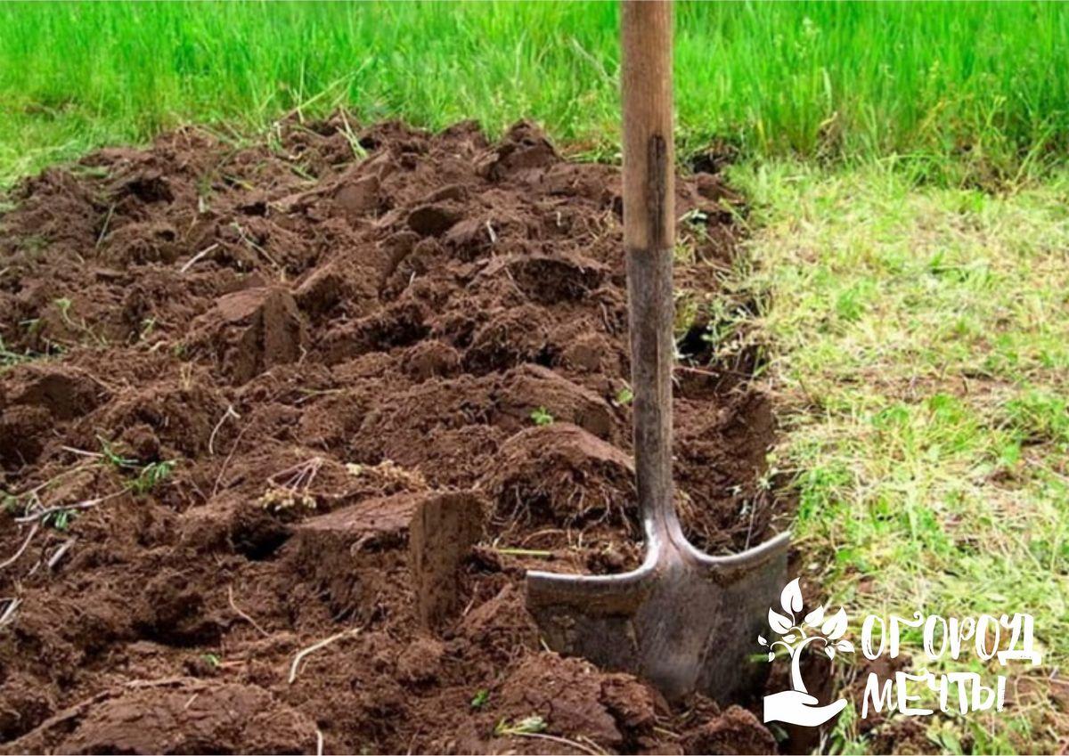 Чем удобрить огород осенью? Внесите под перекопку эти питательные удобрения!