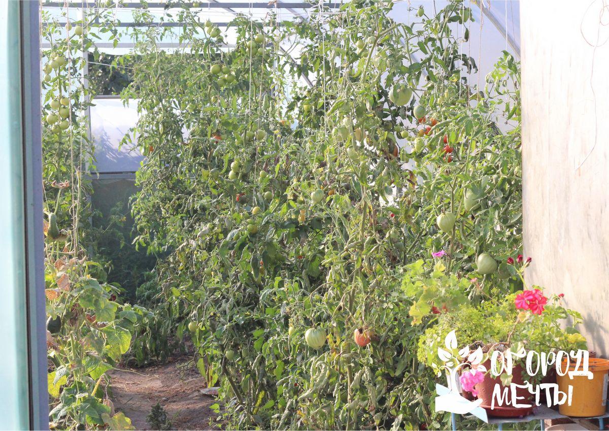 Топ-6 сидератов, которые нужно посеять осенью в теплице