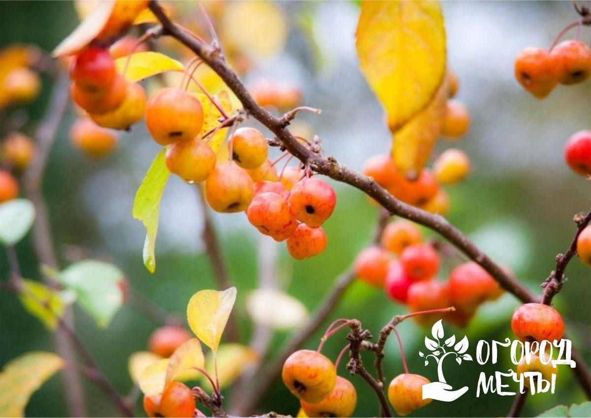 Если вы хотите сохранить свой сад зимой, никогда не совершайте этих ошибок в осеннем уходе!