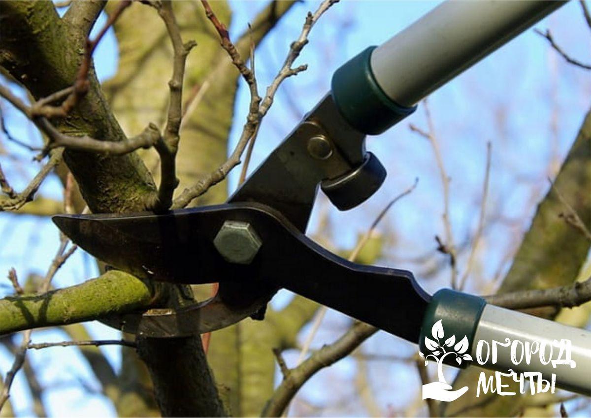 Как использовать ветки после осенней обрезки деревьев и кустарников? Универсальные лайфхаки для практичного дачника!