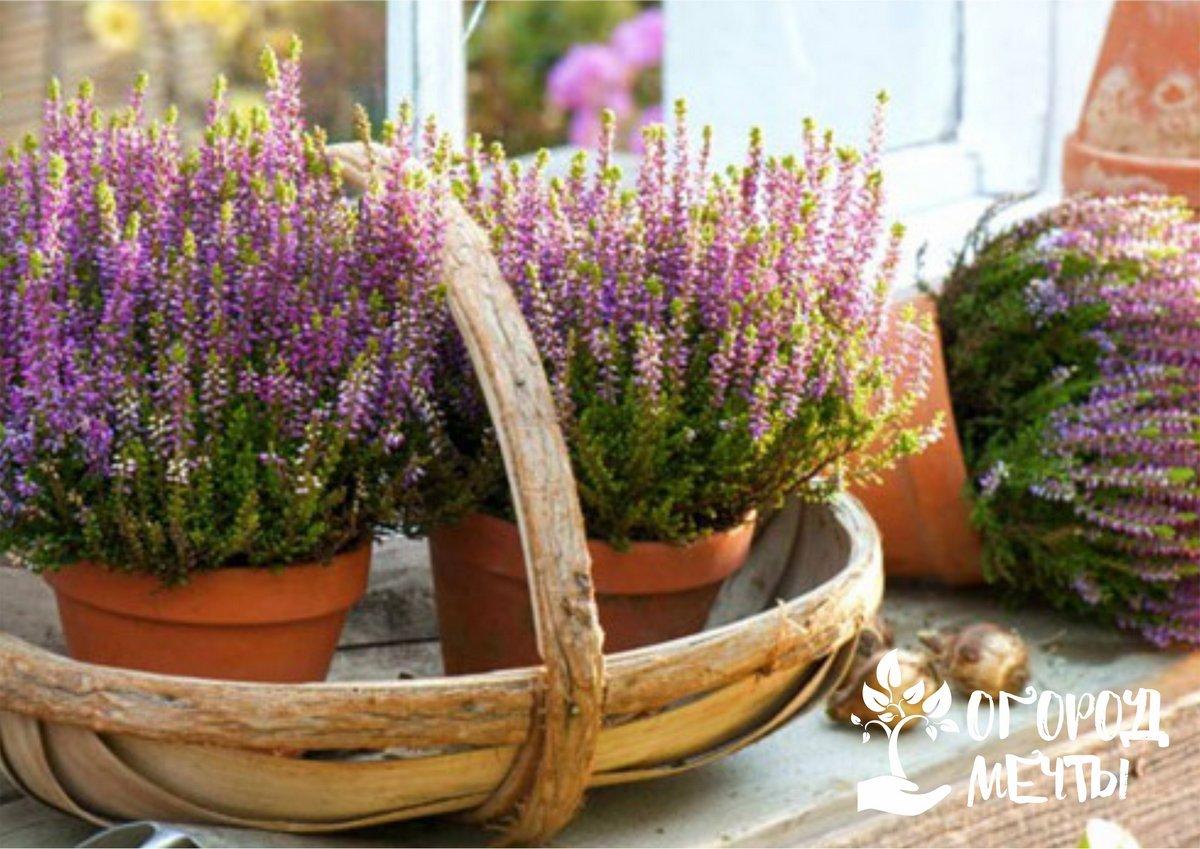 Топ-6 растений для украшения террасы осенью и зимой