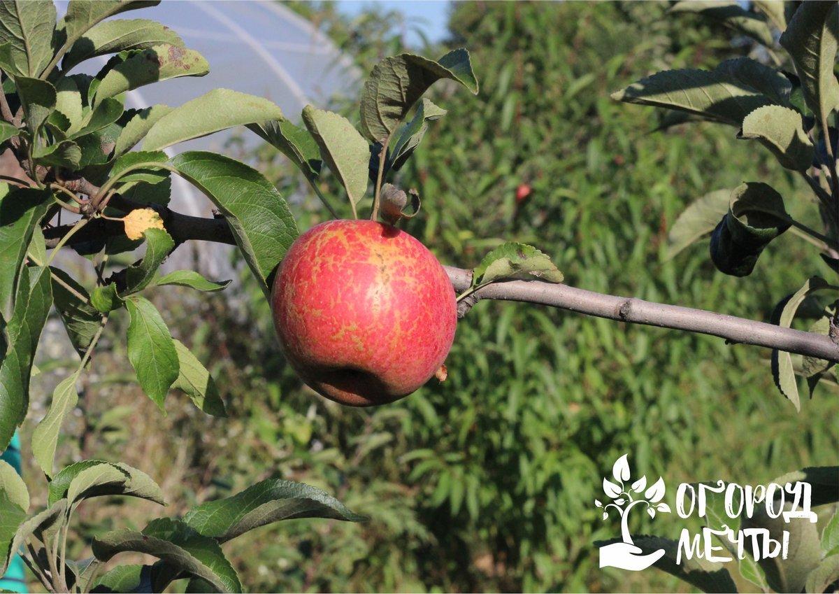 Календарь садовода: девять мероприятий, которые нужно провести в саду в октябре!