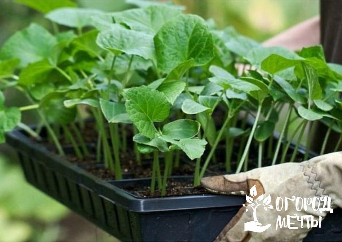 Как подготовить рассадный грунт для огородных растений