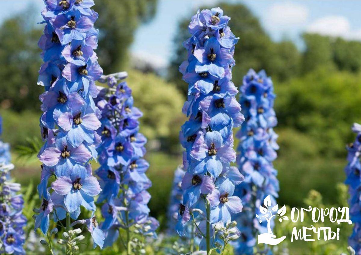 Чтобы весной и летом ваша клумба была самой красивой, обязательно посадите осенью эти садовые многолетники на даче!