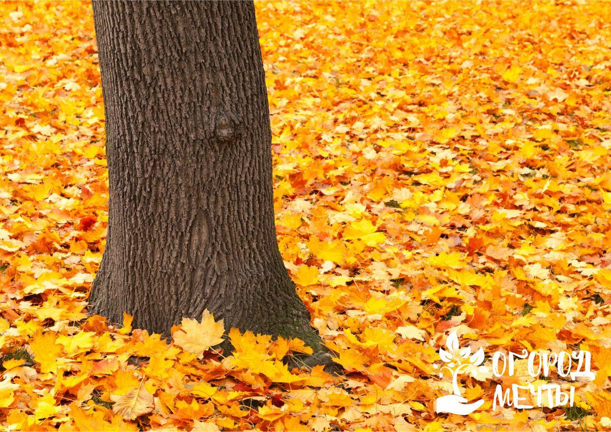 Как использовать опавшую листву с пользой? Воспользуйтесь этими простыми, проверенными и эффективными лайфхаками!