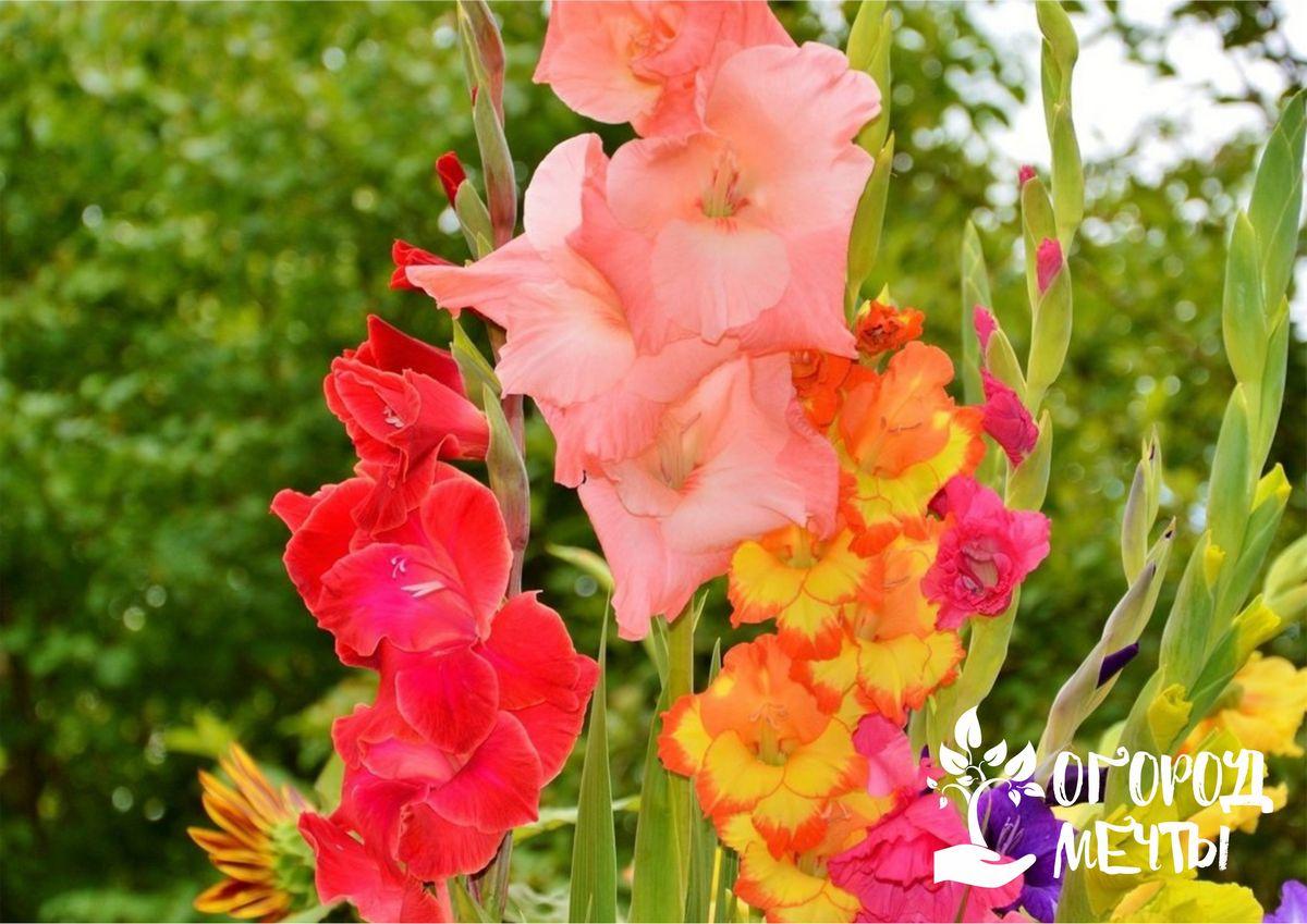 Четыре правила успешного хранения цветочных луковиц