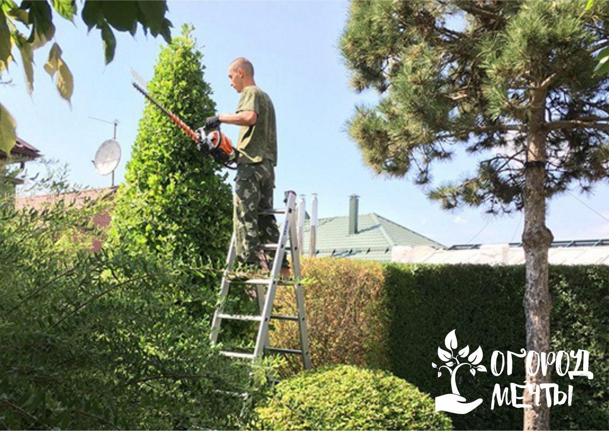 Чтобы уборка урожая была удобной, выберите правильную садовую стремянку! Как выбрать качественную стремянку для сбора фруктов в саду