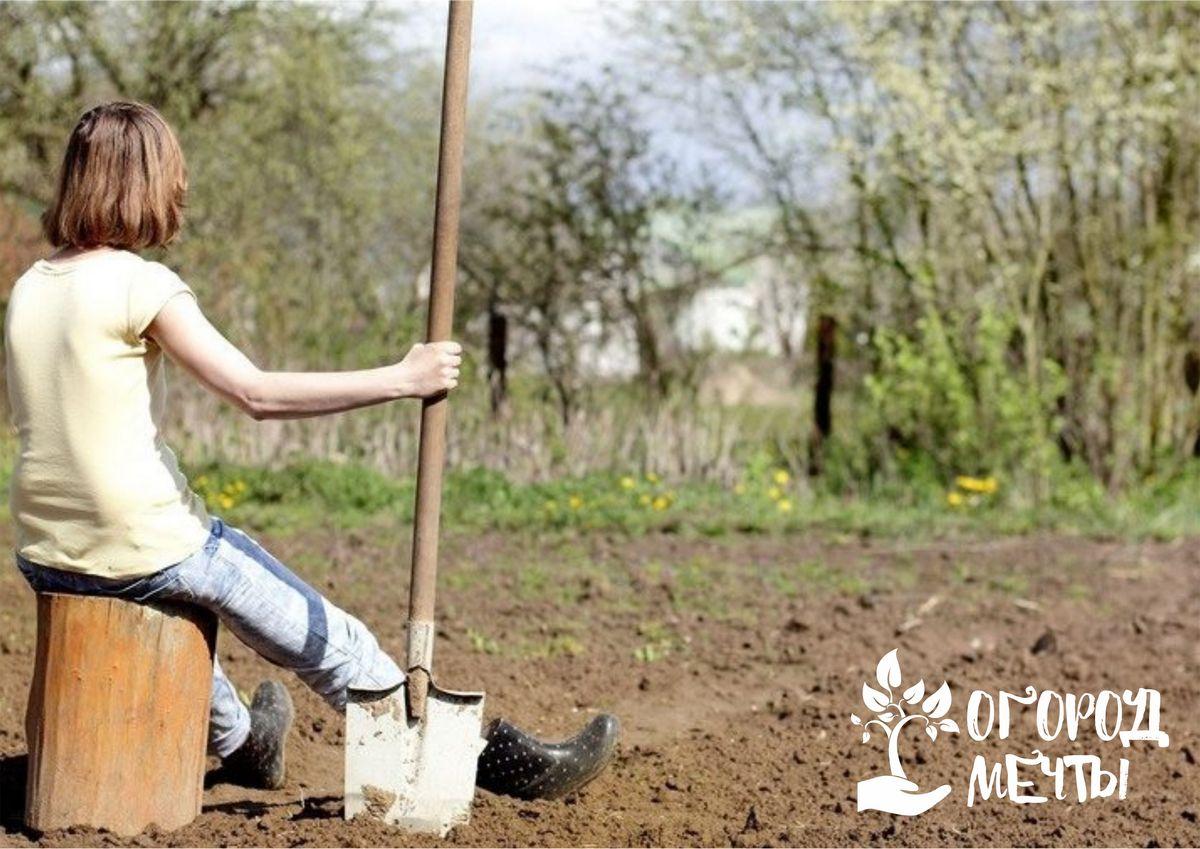 Как облегчить работу в огороде осенью и весной? Подберите качественную и удобную лопату!