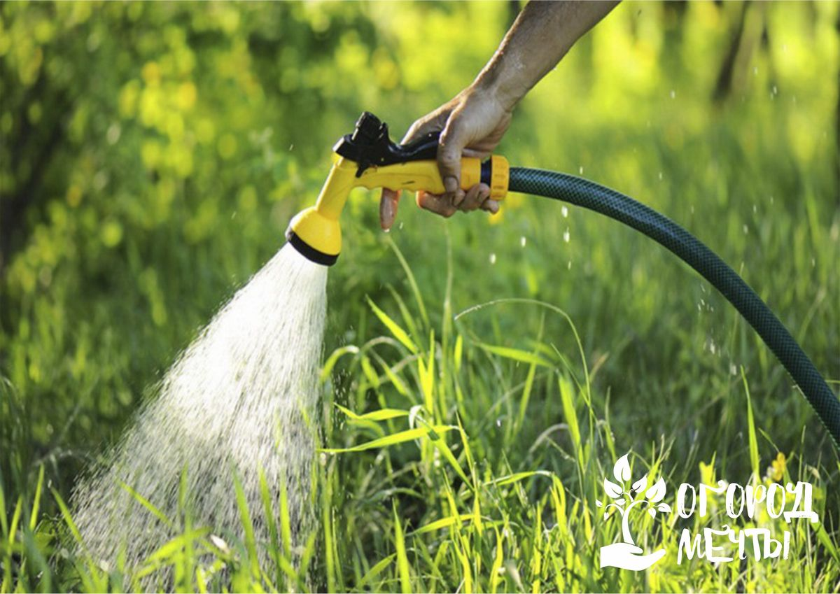Как сделать полив грядок более легким? Подберите правильный шланг для качественного полива растений на даче!