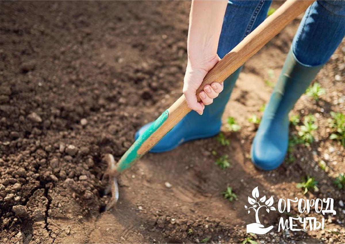 Топ-6 удобрений, которые стоит внести на огород во время осенней перекопки грунта
