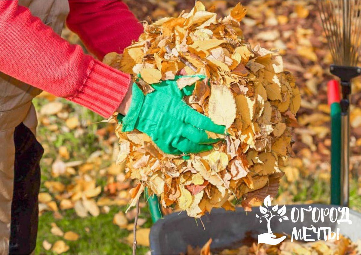Топ-5 ошибок осеннего ухода за садом