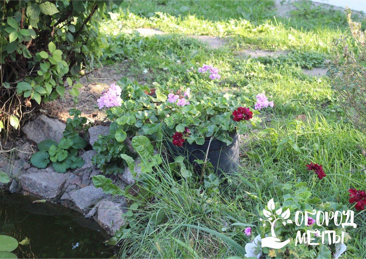 Для создания красивого пруда можно использовать самые разные типы природного камня