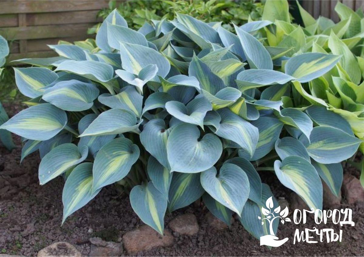 Топ-7 растений с пестрыми и цветными листьями