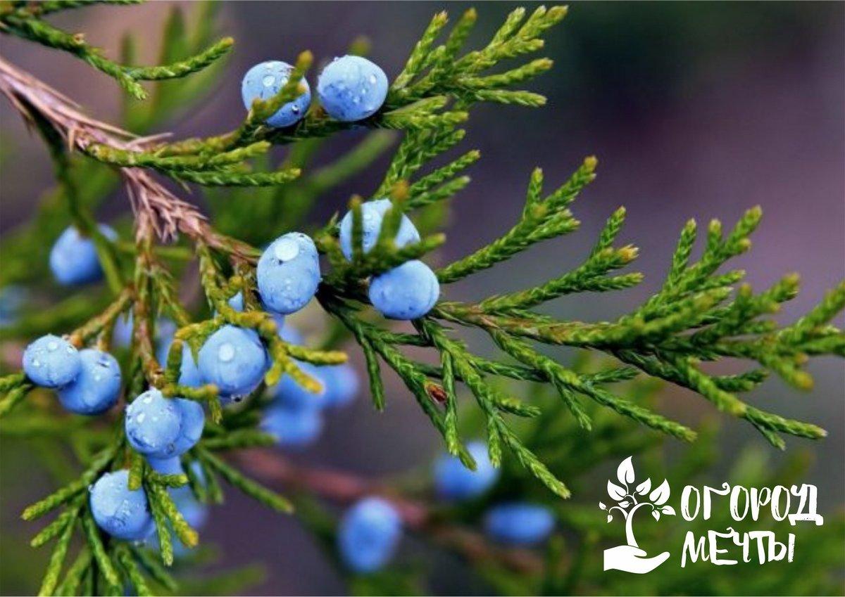 Чтобы зимой терраса на даче радовала красивым видом, украсьте ее этими вечнозелеными растениями!
