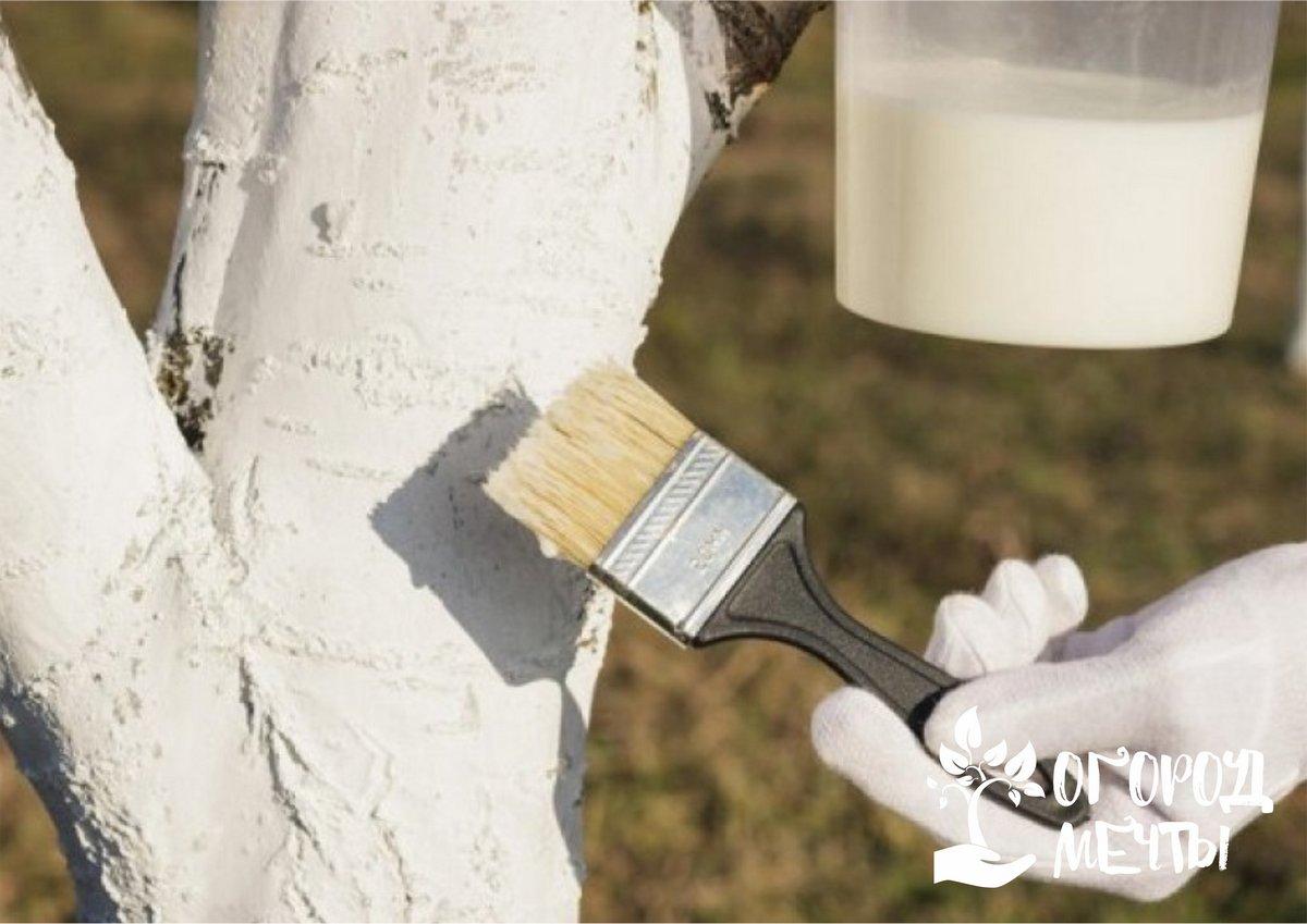 Зачем нужно белить деревья