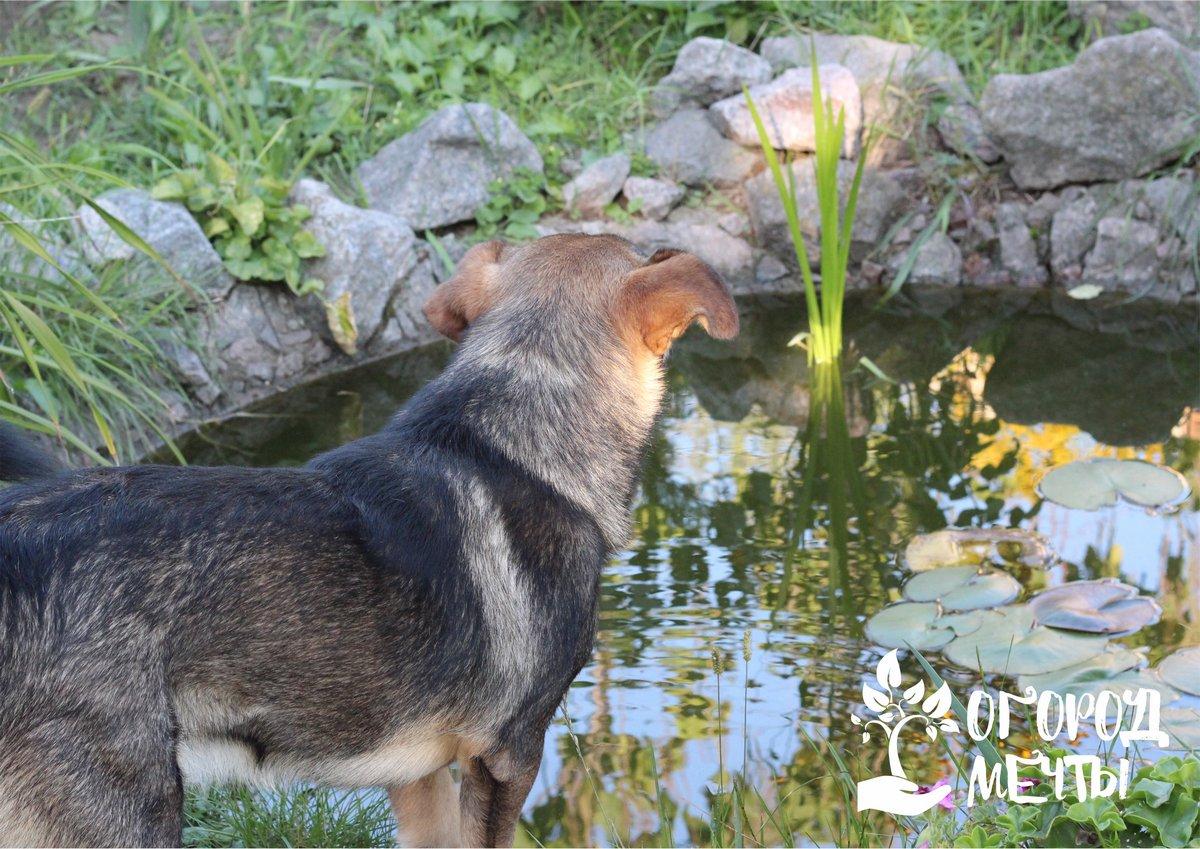 Растения, которые любят тепло, следует выкопать или извлечь из воды и отправить на зимовку в погреб или же подвал