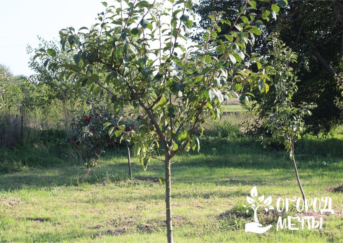 Топ-9 мероприятий октября для садовода