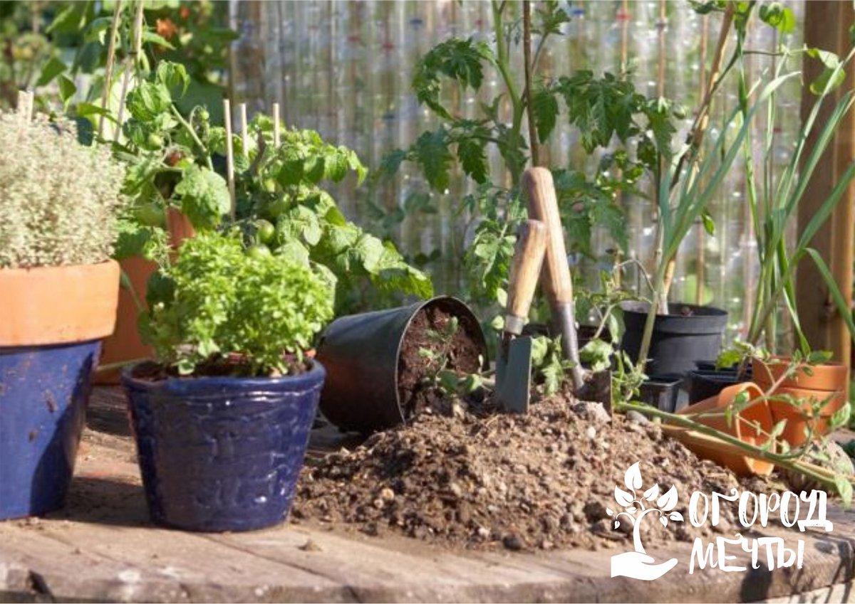 Хотите вырастить крепкую рассаду и существенно сэкономить? Заготовьте рассадный грунт с осени!