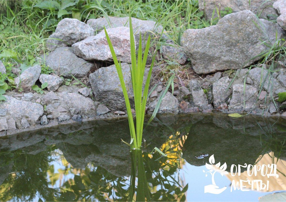 Эти варианты камней и декорирования пруда помогут вам украсить дачный водоем бюджетно и красиво