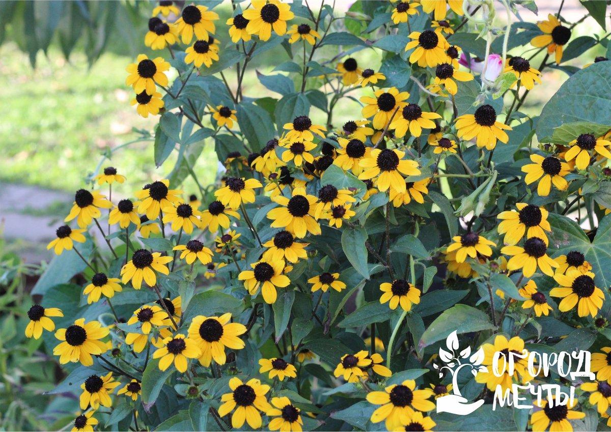 Как сделать красивый палисадник на даче: шесть самых стильных идей для любого сада!
