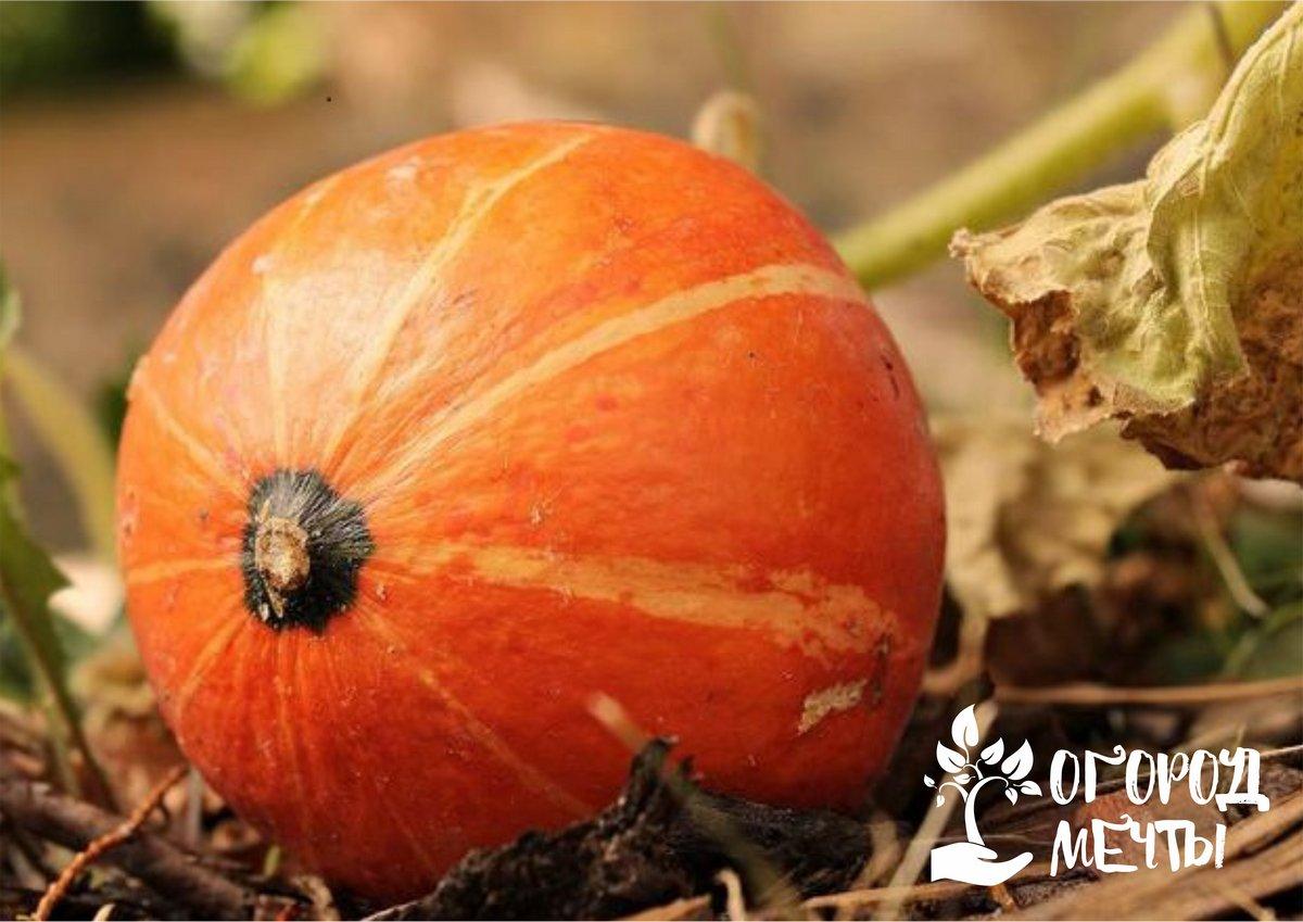 Топ-7 важных дел октября для огородника