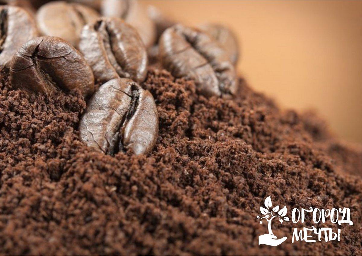 Кофейная гуща – ценная подкормка для дачного участка!