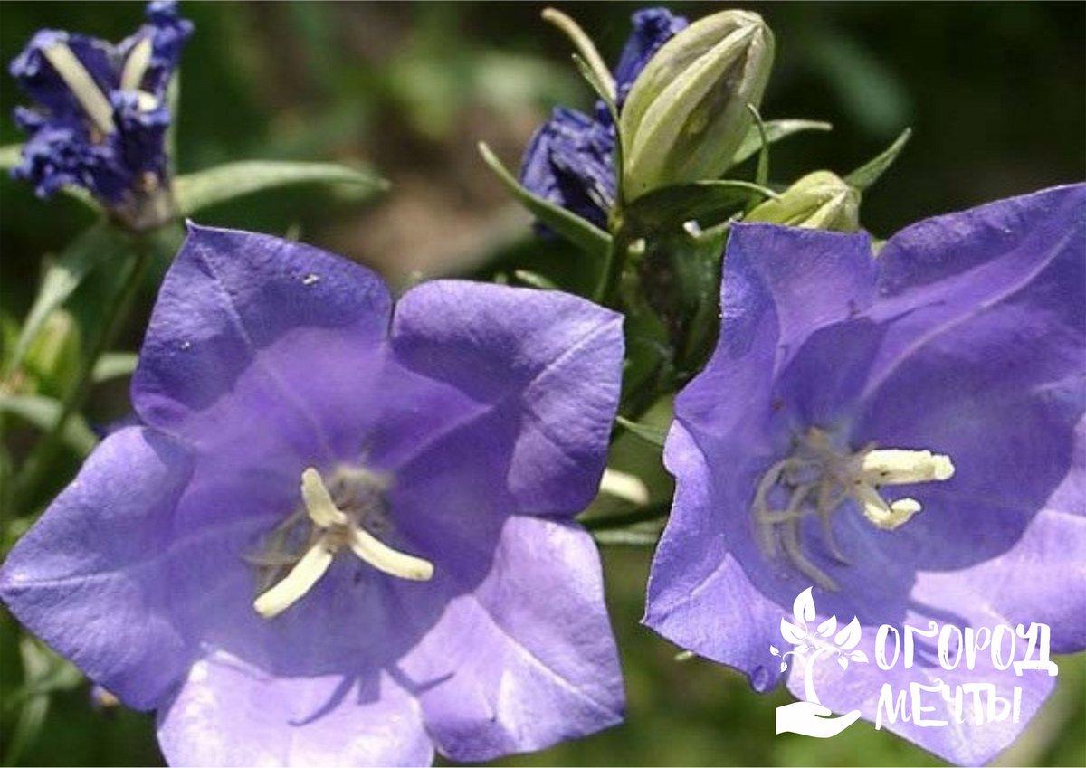 Как быстро украсить свой сад? Повесить на деревьях кашпо с этими ампельными цветами!