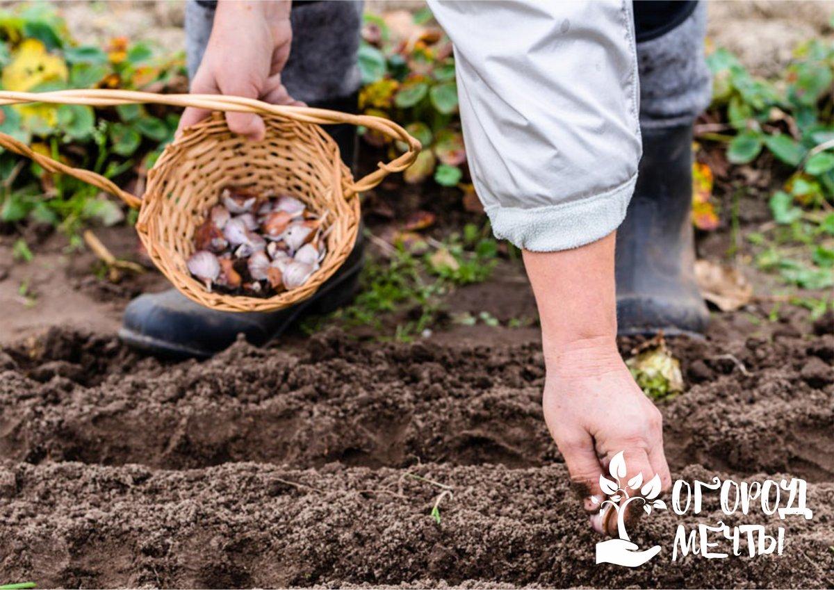 Календарь огородника на октябрь: что нужно сделать на грядках перед наступлением морозов