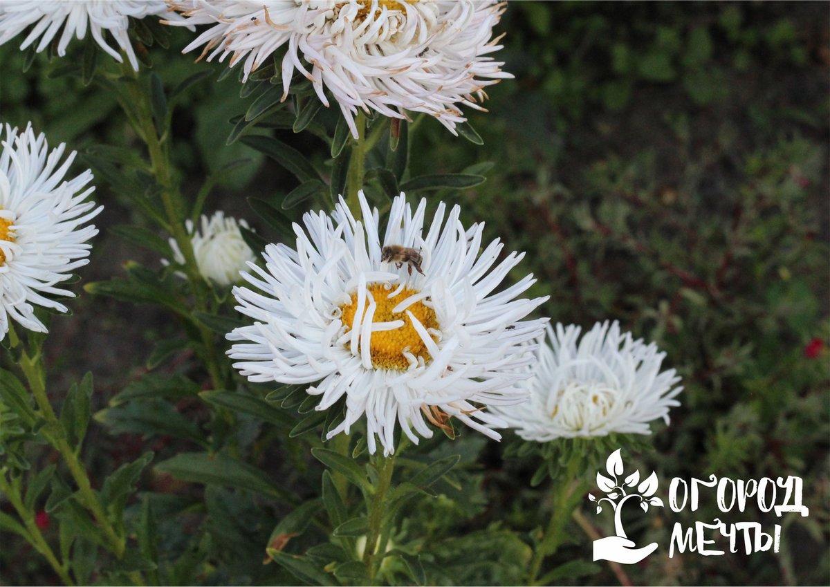 Хотите отдохнуть весной? Посейте эти однолетние цветы с осени и сэкономьте время на весенних посадках!