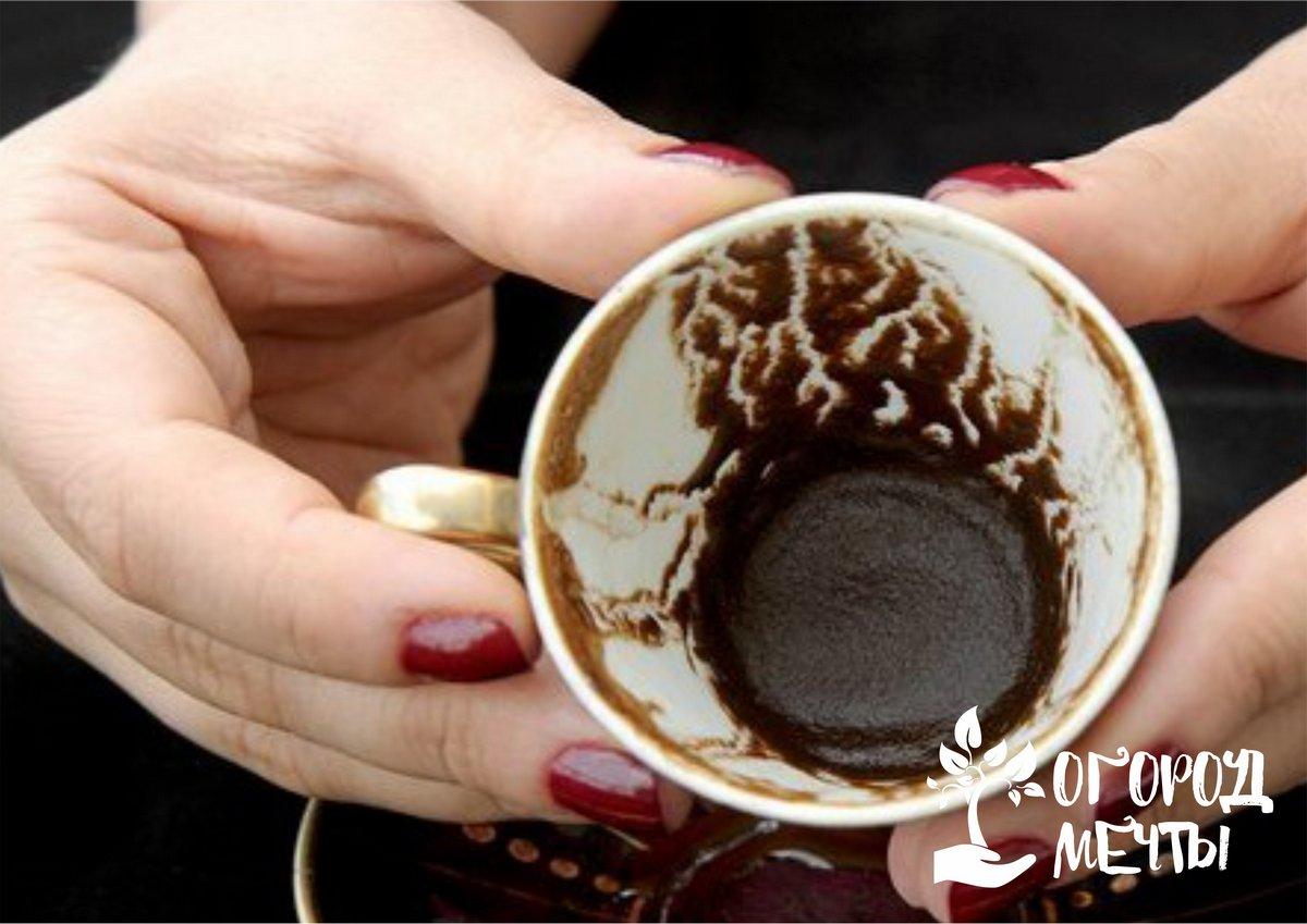 Как применить кофейную гущу в саду и на огороде с пользой
