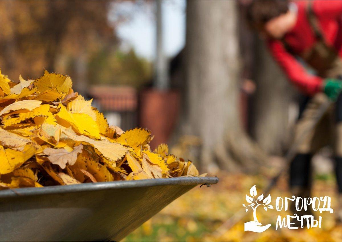 Что нужно сделать на даче до конца осени, чтобы успешно закрыть дачный сезон: полезные советы для каждого дачника